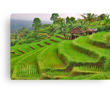 Green rice terraces Canvas Print