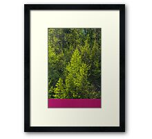 Trees and a container Framed Print