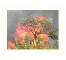 Flame Tree  Art Print