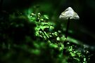 verdant by Purplecactus