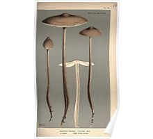 Illustrations of British Fungi by Mordecai Cubitt Cook 1891 V2 0149 AGARICUS  COLLYBIA  LONGIPES Poster
