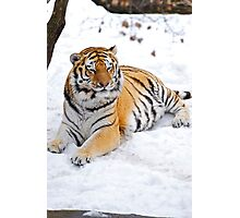 Basking in the Snow Photographic Print