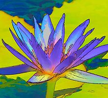 Splendid Water Lily by Teresa Zieba