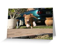 Flying American Pit Bull Terrier Greeting Card