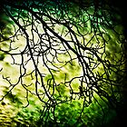 Tree Branches by Carlos Restrepo