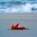 Fleeting - A Single Red Leaf by Sarah Beard Buckley
