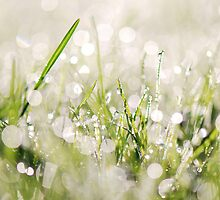 Drizzle'd Grass by Johan Dahlberg