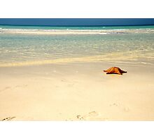 Starfish & the Caribbean Photographic Print