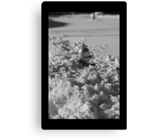 Ice Water Canvas Print