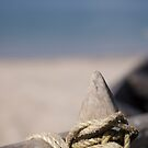 Details on the beach by dhmig