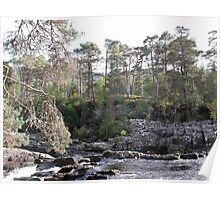 Scots Pine Watch Over a Mountain Stream Poster