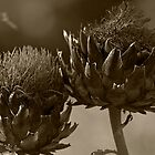 Artichoke  by Christian Hartmann