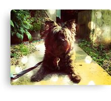 Scouting Toto Canvas Print