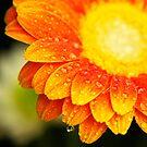 Misty Sunny Flower by blu370n3