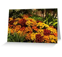 The Richness of Autumn - an Exuberant Display of Chrysanthemums  Greeting Card