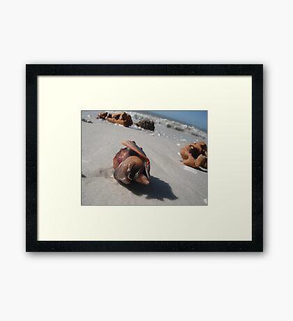 Shy Snail Framed Print