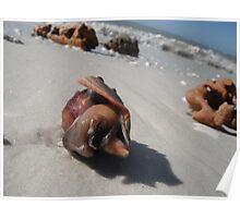 Shy Snail Poster
