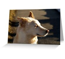 Where are my sunglasses! Greeting Card