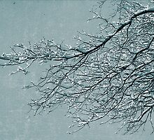 Miracles - Snow Covered Tree by Sarah Beard Buckley