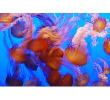 Dancing Queens Photographic Print
