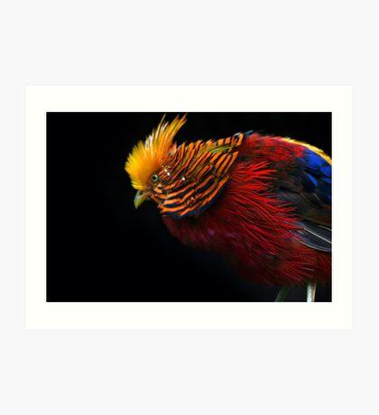 Multi Colored Bird  Art Print