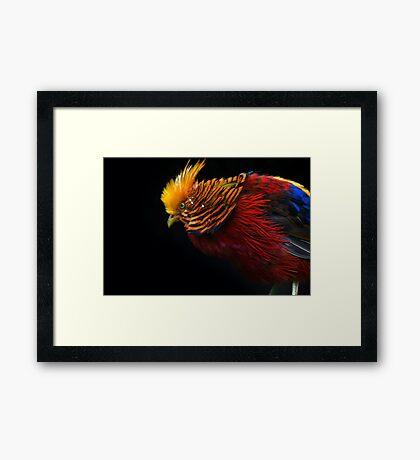 Multi Colored Bird  Framed Print