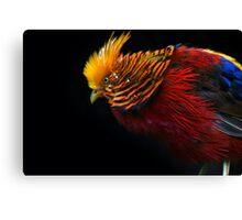 Multi Colored Bird  Canvas Print