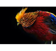 Multi Colored Bird  Photographic Print