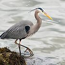Heron in Waiting by Tracy Riddell