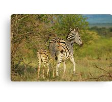 Mom and Baby Zebra Canvas Print
