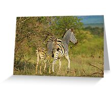 Mom and Baby Zebra Greeting Card