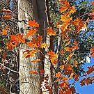 Fall in Pennsylvania by Monnie Ryan