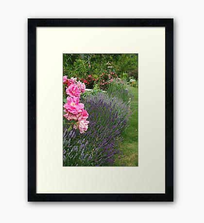 Lavender & Roses Framed Print
