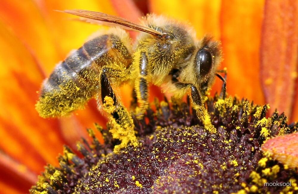 Bee cool by mooksool