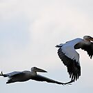 Ethiopia - white pelicans by Marieseyes