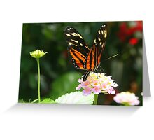 Golden Helicon Butterfly Greeting Card