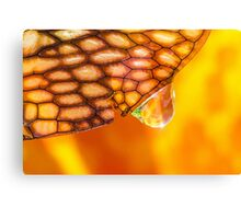 Elixir of the Sacral Chakra Canvas Print