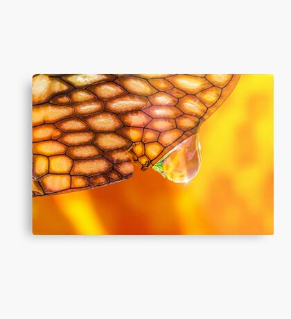 Elixir of the Sacral Chakra Metal Print