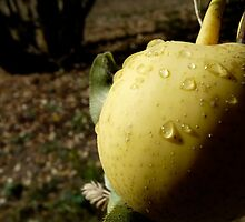 asian pear by tego53