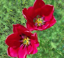 Two Red Tulips For You by Rosemary Gioielli
