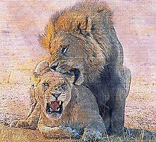 Lions by leksele