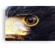 In the eye of the Hawk! Canvas Print