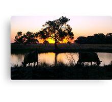 Sunset Drink - Mirror Cows. Canvas Print