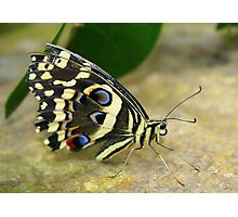 Eye to Eye with a Butterfly Photographic Print