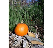 Pumpkin Time 5 Photographic Print