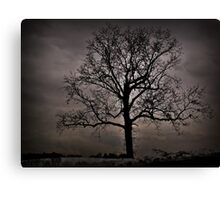 Trees are our best antiques Canvas Print
