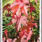 Sweet Sweetgum 3 by WalnutHill