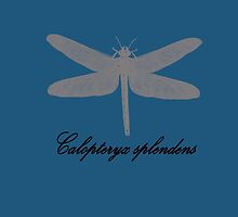 Dragonfly by capricedefille