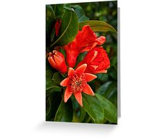 Pomegranate blossoms in four stages Greeting Card