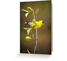 American Goldfinch Painting Greeting Card
